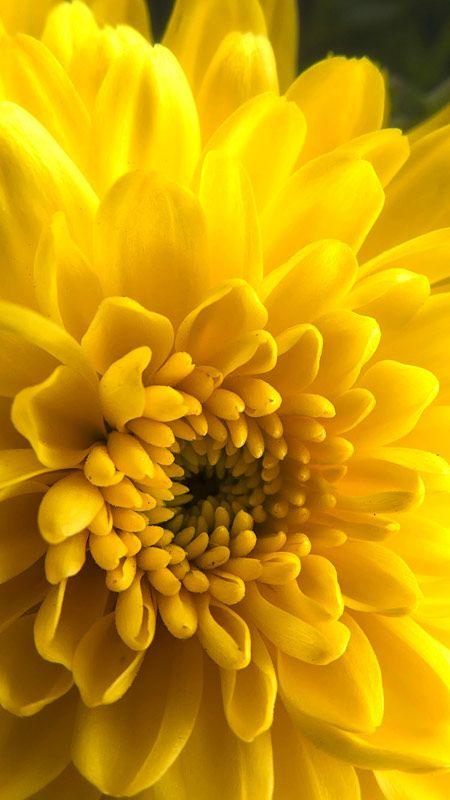 yellow flowers wallpaper hd