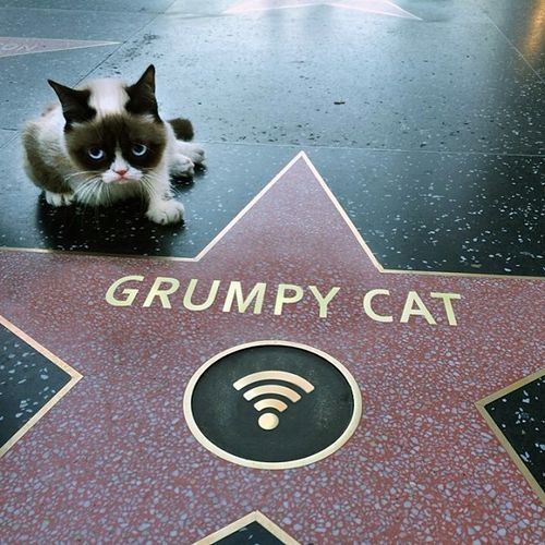 Grumpy Cat was given a star while Kim Kardashian was refused one