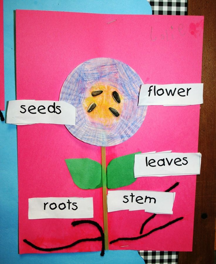 Eberhart's Explorers- activity to do after reading The Tiny Seed by Eric Carle