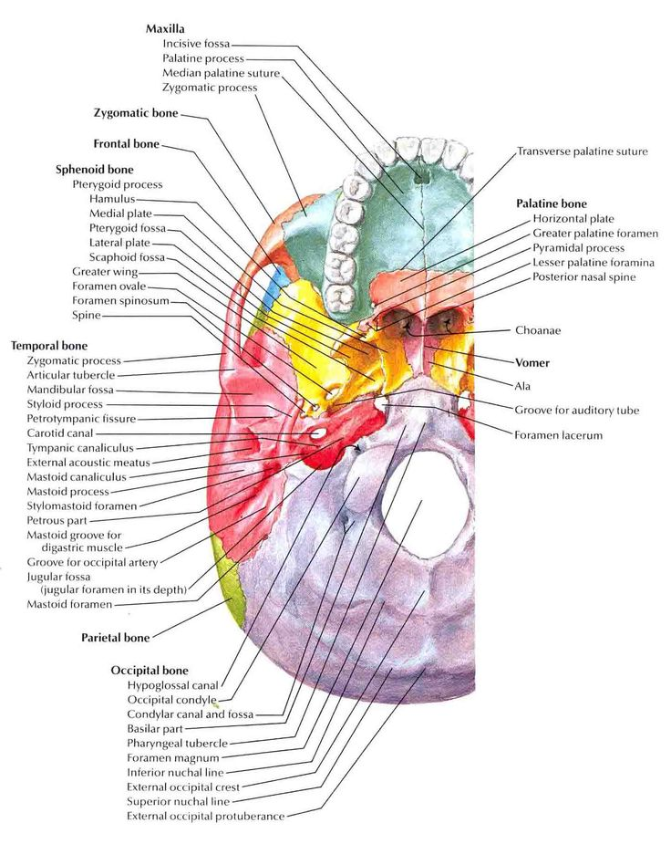an analysis of the dissection of an adult bullfrogs central nervous system The differential diagnosis for ischemic central nervous system infarcts  vertebral artery dissection after a chiropractor neck  in a retrospective analysis by.