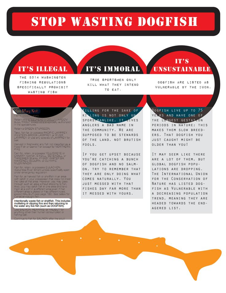 A dogfish shark PSA infographic. Dogfish sharks are routinely abused and wasted, mostly by fishermen who think they hurt other fish species. I, for one, like catching these beautiful sharks.