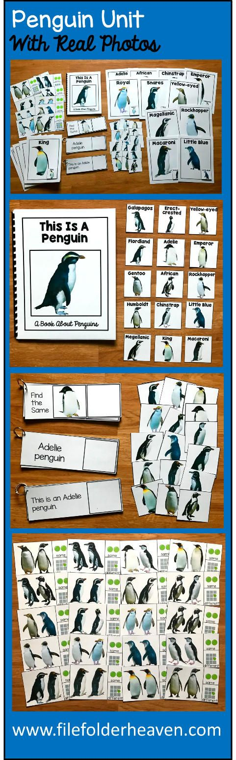 """This Penguin Unit w/Real Photos is packed full of hands-on activities for your Penguin theme and teaches students the different types of penguins.  Activities Included With Penguin Unit:  1. Adapted Book (Interactive Book) w/ interactive matching pieces 2. 1 Set of Interactive Types of Penguins Posters (17 total) 3. 25 Same and Different Penguins Task Cards 4. 3 Sets of """"Big Flips"""" Matching Activities  --Matching Photo to Photo (Penguins) --Matching Photo to Word --Matching Photo to Sentence"""