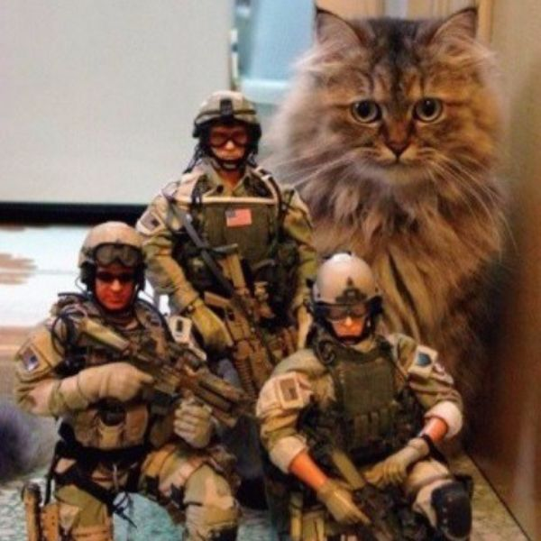 Top 10 Super Tough & Fully Trained Army Cats  The troops of Kitty Crisis Counter Squadron  #cats #caturday #ARMY