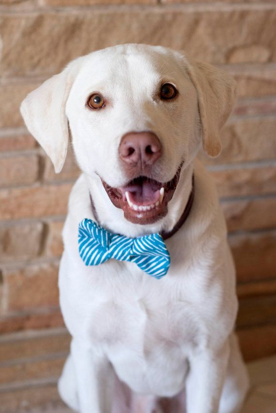 Animal Cute Tie Lab Picture Bow