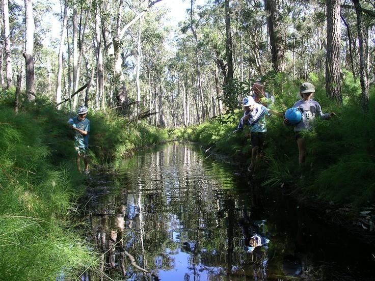 Narawallee fire trail (creek)