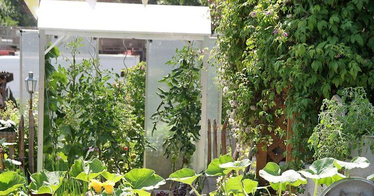 1000 ideen zu tomatenhaus auf pinterest. Black Bedroom Furniture Sets. Home Design Ideas