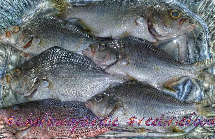 #chefbwoyardie#fishfry  #reeliriefood #foodgasm #foodstagram #foodie #foodporn #cheflife #irie #homemade #homecooking #friedfish #escovitchfish #jamaicanfood #seafood  #Americanfood #goodfood #saltlife #fishing #fishporn  #fisherman #realtor #chef #mojarra #sandperch #floridalifestyle #florida by reel_irie_fishing