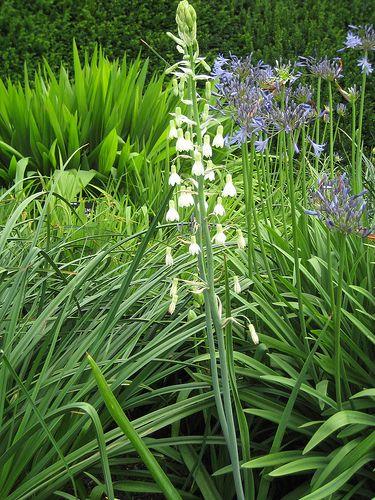 2008_07_23 Savill Garden 008   Flickr - Photo Sharing!