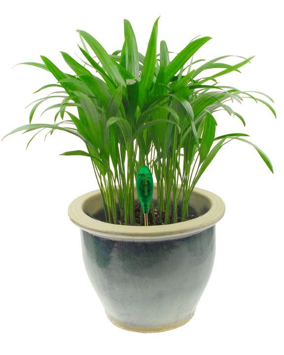 planten in de venster bank geeft sfeer aan de klas.