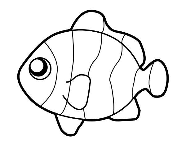 Dibujo de Pez payaso para colorear