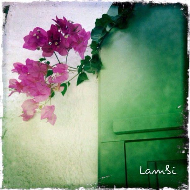 Instacanv.as Photo by lambsios