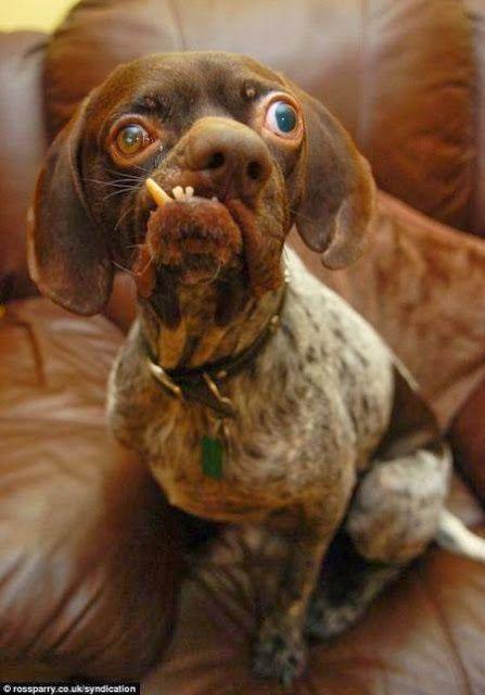 Resultado de imagen para perros mas feos del mundo 2016