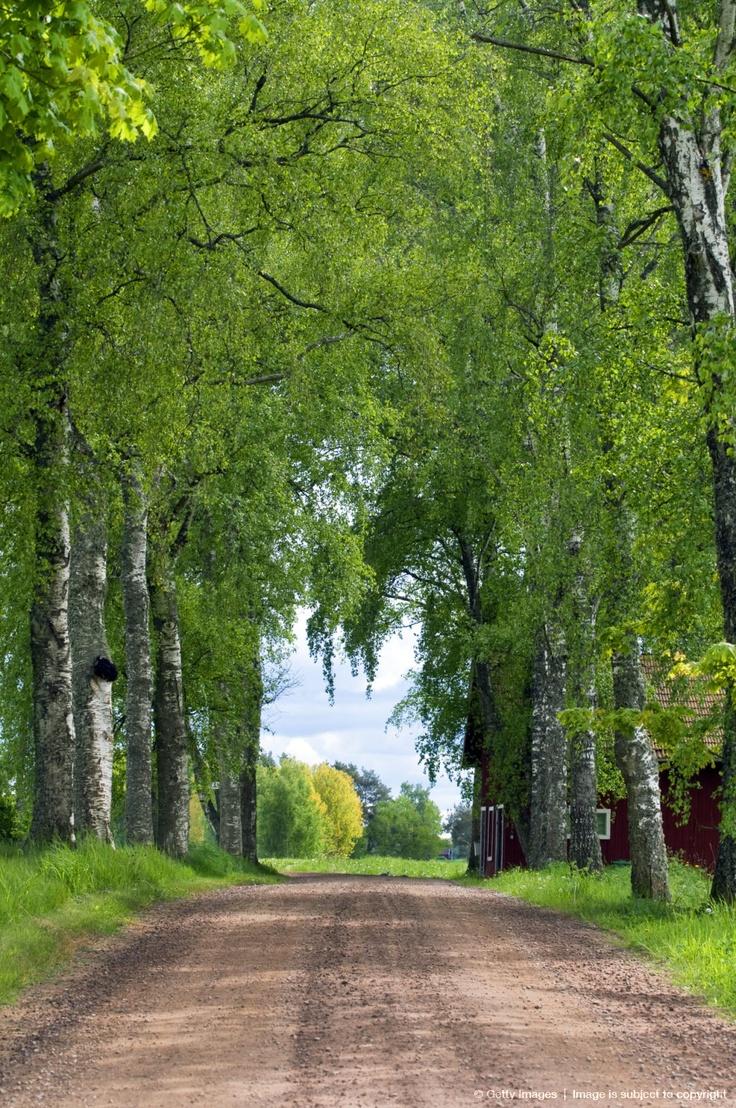 Country Road in Vastergstland, Sweden