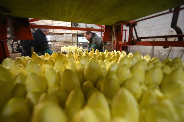 4/6/17 Endive producers on the grill in EU price-fixing case – POLITICO    Case will determine to what extent farmers are exempt from EU's regular competition rules