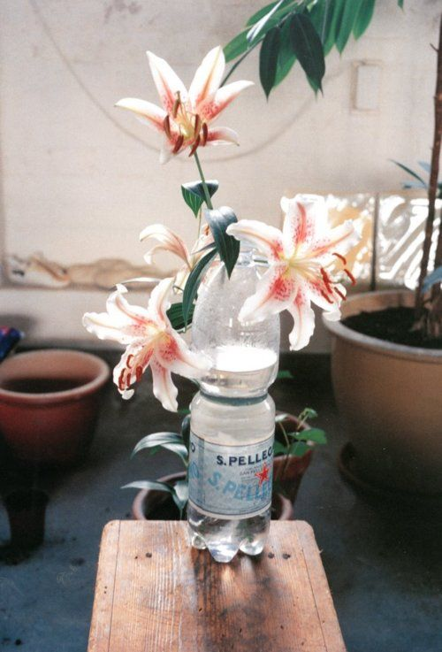 Think lilies are my favorite flowers. Wolfgang Tillmans