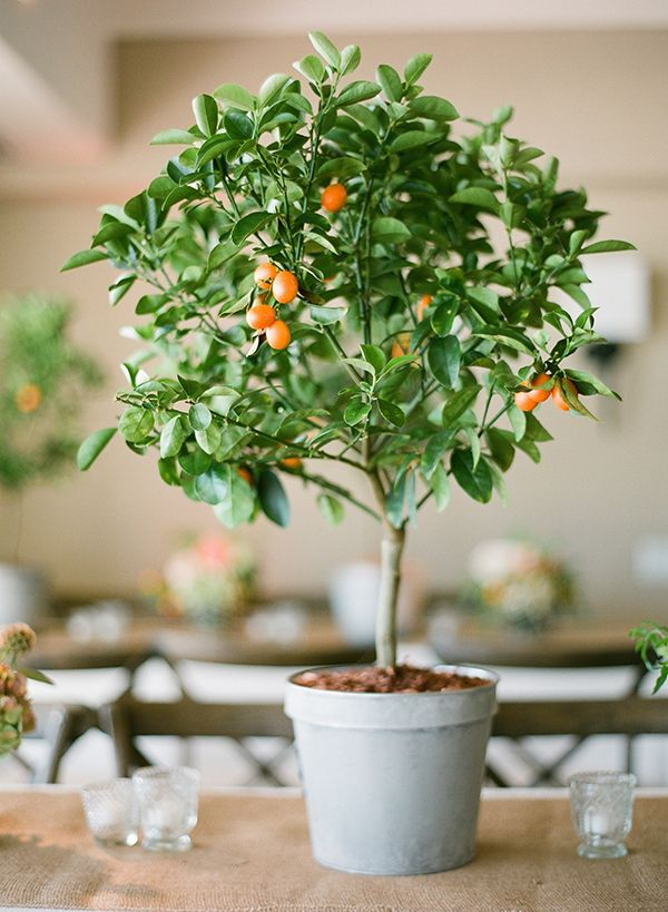 Citrus Tree Centerpiece Photo By Esther Sun Photography Wwwwedsocietycom wedding