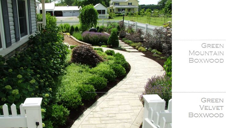 25 best ideas about Green mountain boxwood on Pinterest