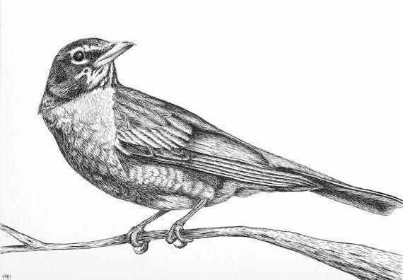 Robin Drawing Pen and Ink Bird Art Bird by HeatherAnnOrlando