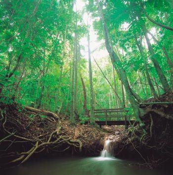 Dunk Island Rainforest
