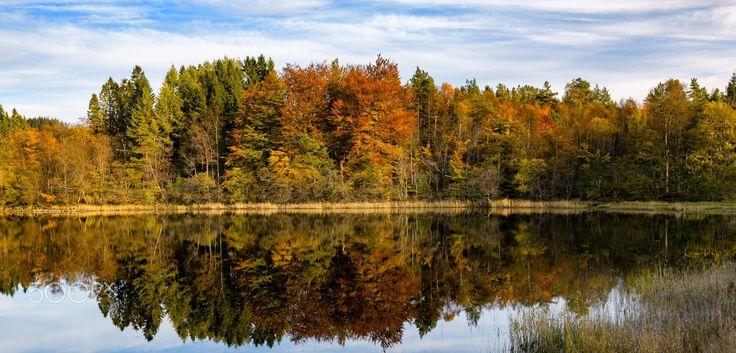 Autumnal Reflections - Autumnal reflections in a calm freshwater lake.