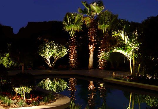 palm tree outdoor pendant lighting, pine tree landscape lighting, outdoor led landscape lighting, palm tree landscape lighting design, crown led rope lighting, on palm tree outdoor landscape lighting ideas