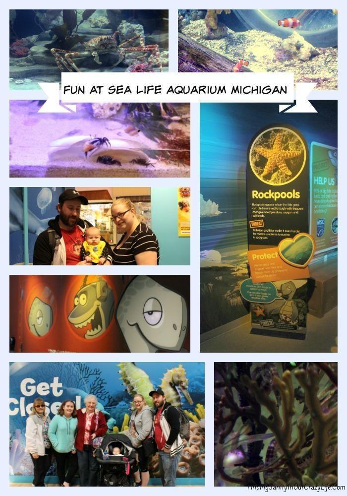 Michigan Adventures To Sea Life Aquarium Things To
