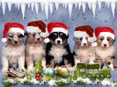 Little Dogs - dogs, christmas, winter, xmas, puppies
