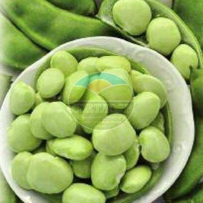 Фасоль лимская сорт Сладкий Боб Лимская фасоль богата белками – до 18% и полезна для наращивания мышечной массы. Широкие бобы, длиной до 10 см, содержат по 3-5 больших бобов. Молодые стручки и зрелые семена используют в пищу в вареном или жареном виде. Идеальны для заморозки. Созревает за 65-75 дней. Жаростойка, устойчива к неблагоприятным условиям.