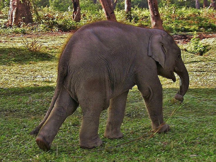roba66 posted a photo:  NEPAL, Royal Chitwan-Nationalpark, Elefanten-Aufzuchtstation  NEPAL, Royal Chitwan National Park, visit to an elephant rearing station