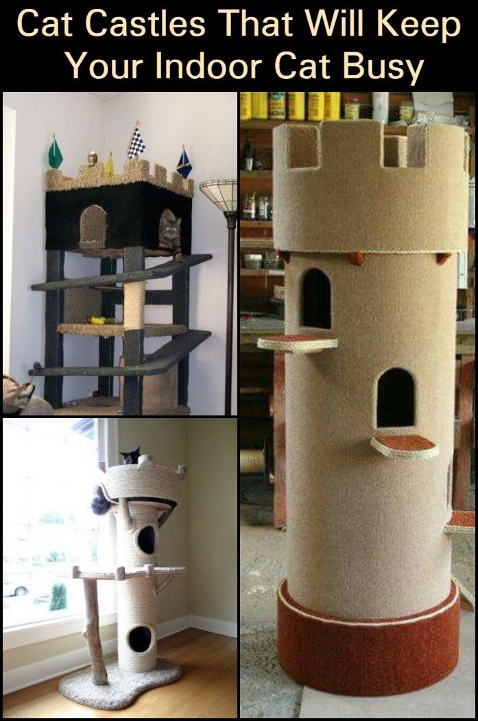 Cat Castles To Keep Your Indoor Cat Busy Diy Projects For Everyone Cat Castle Diy Cat Tower Cat House Diy