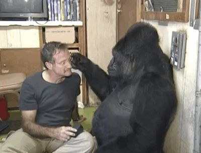 Robin Williams with Koko. Watch the heartwarming video of the actor's meeting with Koko. | These Photos Of Koko The Gorilla Mourning The Loss Of Robin Williams Are Incredibly Moving. Rest in Eternal Peace ROBIN.