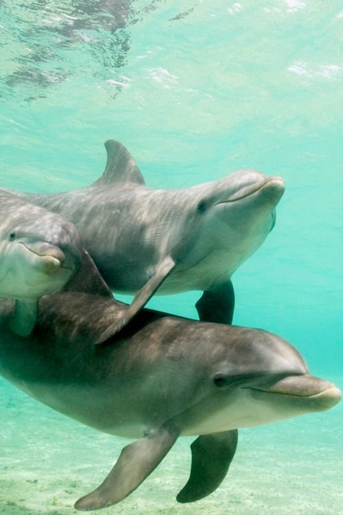 dolphinsWater, Animal Pictures, The Ocean, Dolphins, Cancer Awareness, Sea Animal, Baby Animal, Families, Beautiful Creatures