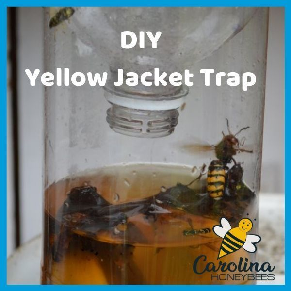 How To Battle Yellow Jackets Yellow Jackets Are Actually A Type Of Wasp Not A Bee But Who Cares Their Sting Hurts You Can Make This Simple Yellow Jacke 2020