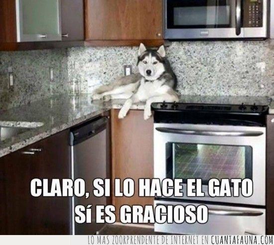 Solo es gracioso si lo hacen los gatos