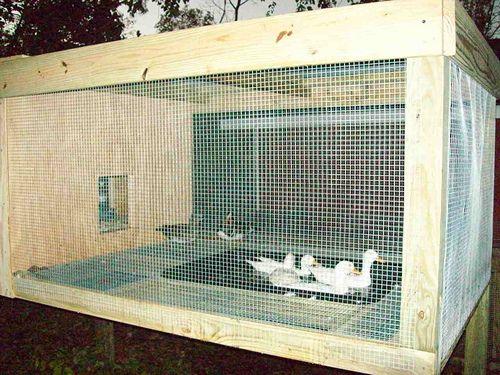 68 best images about ducks on pinterest raising ducks for Duck hutch ideas