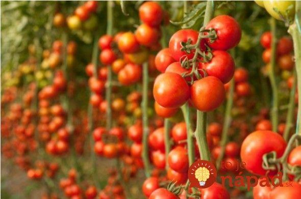 Skúste tento jednoduchý recept a vaše paradajky nielen porastú ako divé, ale budú tiež zdravé a veľké. Ja naň nedám dopustiť!