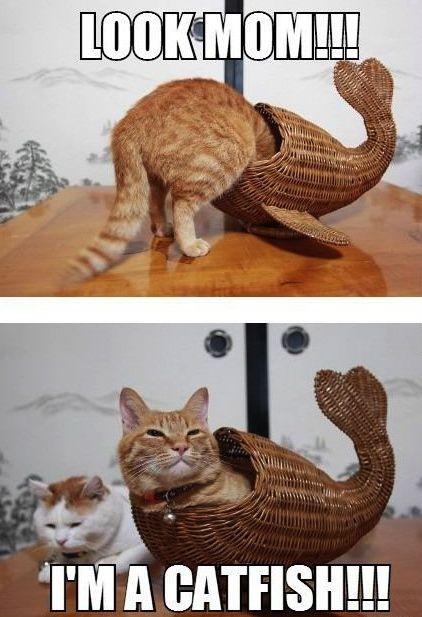 Look Mom! I'm A Catfish