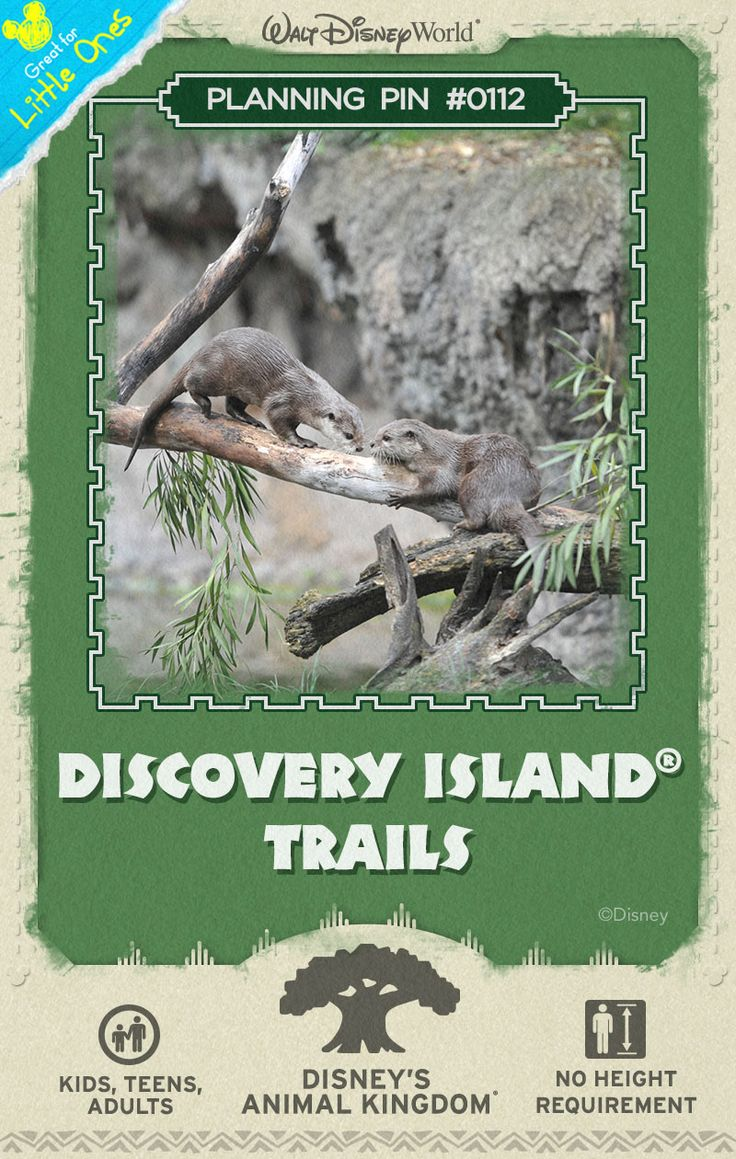 Walt Disney World Planning Pins: Stroll along tranquil pathways around the Tree of Life and discover a lush landscape brimming with wildlife. #DisneysAnimalKingdom #animals #vacation