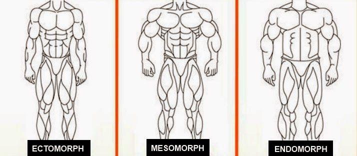 Τι σωματότυπος είστε; Εκτόμορφος, Μεσόμορφος και Ενδόμορφος | Total Fitness