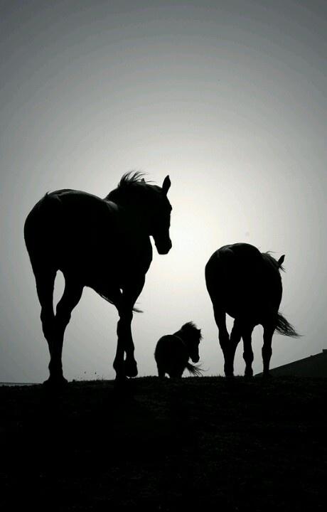 3 paarden in de nacht