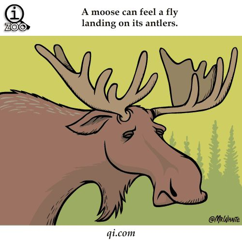 Fun Animal Facts You Never Knew Existed