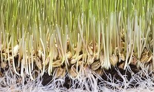 Gardens: drug therapy for plants | James Wong | Life and style | The Guardian