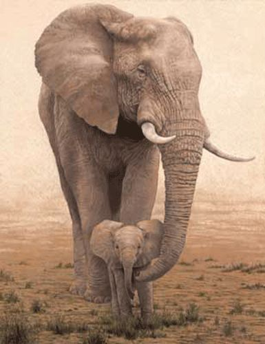 way cuter than human baby picturesAfrican Elephant, Baby Elephant, Mothers, Animal Baby, Wildlife, Baby Animal, Baby Girls, Elephant Baby, Beautiful Creatures