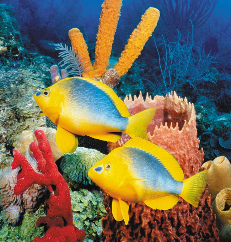 Underwater Peace and its inhabitants ... fish among coral