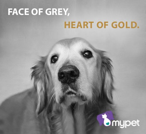 Adopt a senior pet! They have so much love to give.