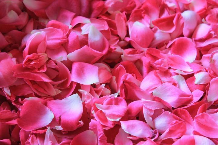 Rose Potpourri Recipe | The Old Farmer's Almanac How To Make Rose, How To Make Homemade, Diy Craft Projects, Diy Crafts, Potpourri Recipes, Old Farmers Almanac, Old Rose, Rose Petals, Sewing Crafts