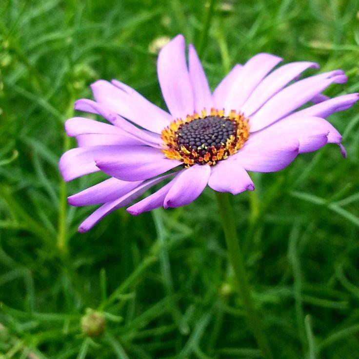 Nature:Good morning!!!