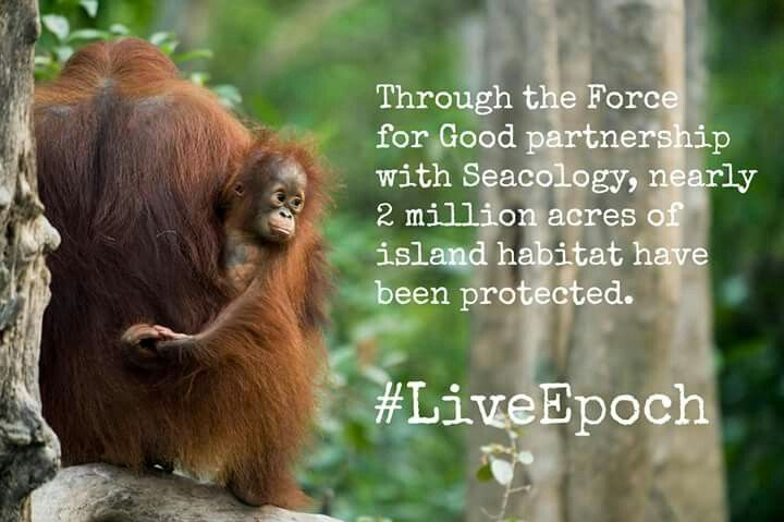 Seacology is just  one of our projects  #LiveEpoch