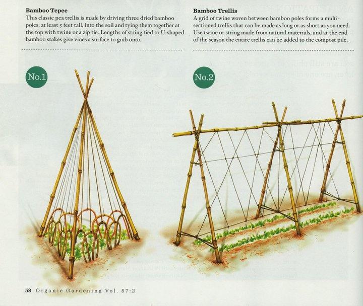 More garden constructions...Gardens Ideas, Green Thumb, Bamboo Gardens Trellis, Bamboo Trellis, Gardens Yards, Vegetables Gardens, Bamboo Teepe, Peas Trellis, Gardens Growing