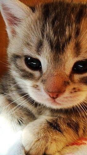 (≡´•.̫ • `≡)  sweet baby kitten
